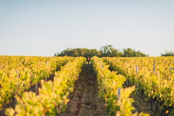 Cru Bourgeois Exceptionnel - Grand vin de Bordeaux - Caisse Bois - Union des Grands Crus - UGCB