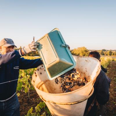 Cru Bourgeois Supérieur - Grand vin de Bordeaux
